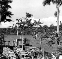 126.Ponte-de-lenha-no-baixo-Tocantins-município-de-Cameta-PA-1938