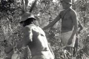 196. Indios Xavantes foram imcorporados aso trabalhos da F.B.C