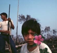 Guerreiro Ururam e filho em sua derrubada. Posto Lages. Rondônia, 1981